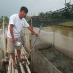 Người có thâm niên 10 năm nuôi ếch Thái Lan chia sẻ bí quyết thành công