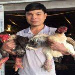 Nuôi gà giống Đông Tảo cùng thương phẩm, lãi 500 triệu đồng/năm