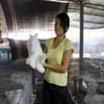 Mỗi năm thu lợi 100 triệu đồng từ nuôi thỏ New Zealand