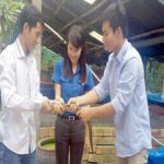 Cất bằng đại học về quê nuôi lươn không bùn