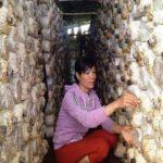 Khởi nghiệp từ cây nấm mỗi năm thu nửa tỷ đồng