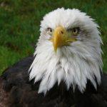 7 nguyên tắc sống của chim đại bàng