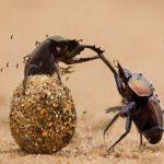 Chuyện ngắn về con bọ: Bài học về sự nhận thức hạn chế của bản thân