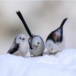 Chuyện về 3 chú chim - Yếu tố nào quyết định vị trí của chúng ta trong cuộc đời