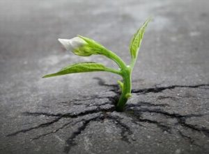 Mất mát không phải là một thất bại, và thành công cũng không nhất thiết là một thành tựu